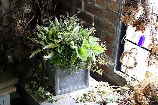 ホスタ'ファイヤーアンドアイス'の日陰で楽しめる寄せ植え の画像|フローラのガーデニング・園芸作業日記