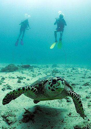 パタヤ ダイビングはカメと一緒に泳ぎたい。パタヤ旅行おすすめのスポット!