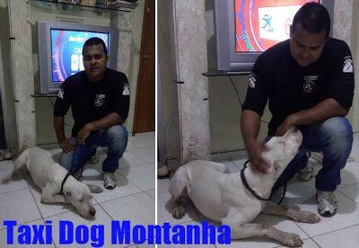 TAXI DOG MONTANHA TRANSPORTE DE ANIMAIS NO RIO DE JANEIRO: VARGEM GRANDE-RJ para BELO HORIZONTE-MG
