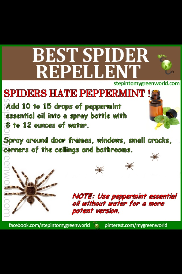 how to use peppermint oil to get rid of spiders