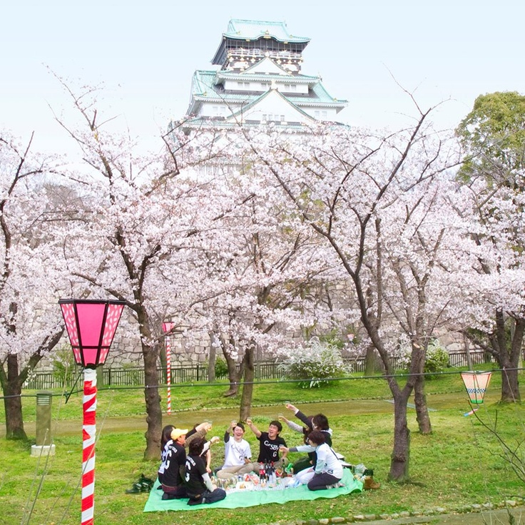 sakura (cherry blossom) and Japanese castle
