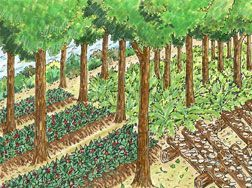 forest farming info by Univ Minn Forest Resources
