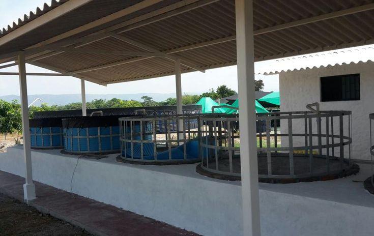 Granja El Nogal - Espinal (Tolima)