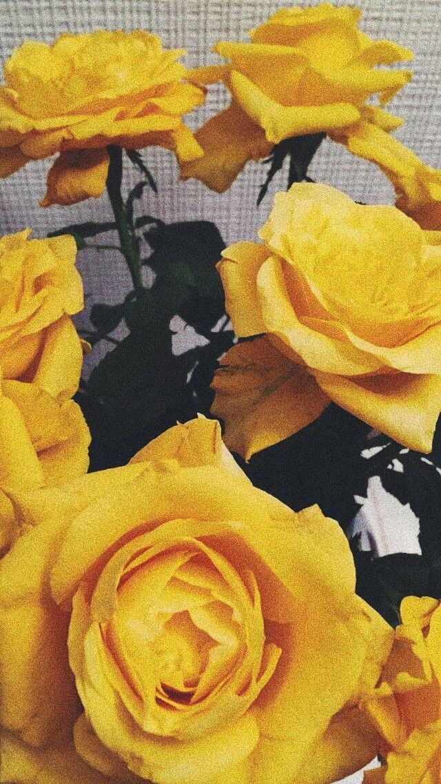 Yellow Rose Wallpaper Yellow Tumblr Lockscreens Aesthetic Is Hd Wallpapers Backgrounds For Desktop Or Mobile In 2020 Yellow Aesthetic Flower Wallpaper Yellow Roses