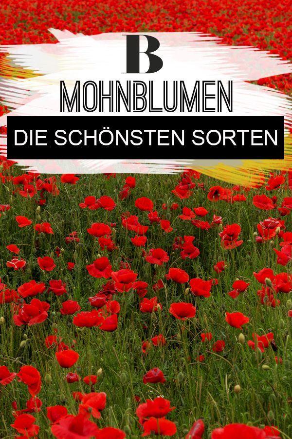 Schone Mohnblumen Von Filigran Bis Uppig Mohnblume Blumen Garten Bepflanzen
