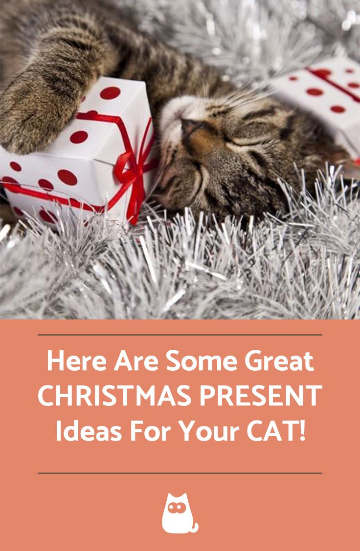 10 Unique Christmas Gifts For Your Cat Christmas Presents For Cats Pet Christmas Presents Cat Christmas Gift