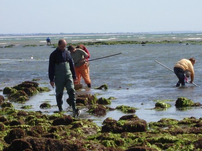 La pêche à pied - Île-Tudy - Site officiel de la commune