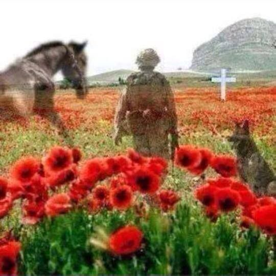 Veterans Day Dog And Horse Pictures