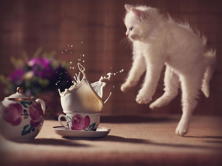 Just some fabulous jumping cats! - Imgur