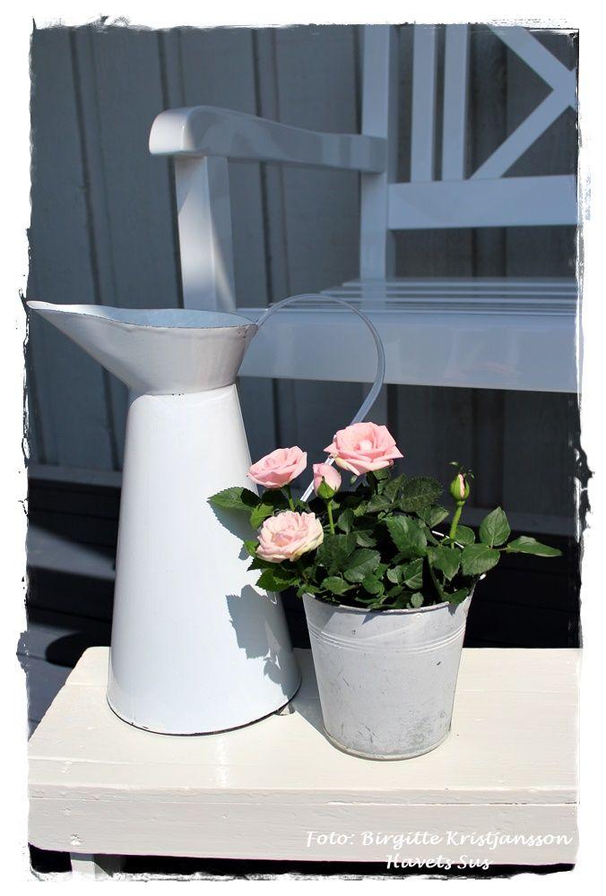 Havets Sus, Instagram, Ib Laursen, white, flowers