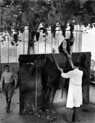 Docteur Spitz vétérinaire, 1954 |¤ Robert Doisneau | 3 avril 2015 | Atelier #Robert Doisneau | Site officiel