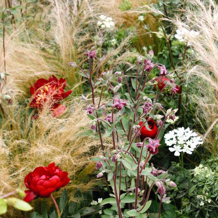 17 best images about breathtaking plant combinations on for Planting schemes with grasses