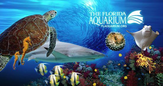 One Of The Best Aquariums The Florida Aquarium Located