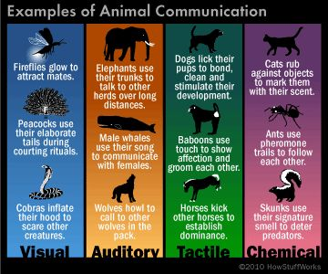How do animals communicate?: Animal Facts: Animal Planet