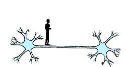 Leren is een makkie! Je brein bestaat uit hersencellen met uitlopers. Je brein reageert op wat binnenkomt via je zintuigen, bijvoorbeeld de geur van friet maakt je hongerig. Dan maken zenuwcellen verbindingen met elkaar; Leer je iets nieuws, dan maakt je brein een nieuwe verbinding! Zo'n verbinding is nog zwak. Herhaling maakt hem sterker. DAAROM is oefenen  herhalen zo belangrijk!