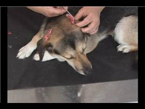 181 best dog grooming images on pinterest dog haircuts pet basic dog grooming applying dog grooming bows solutioingenieria Image collections