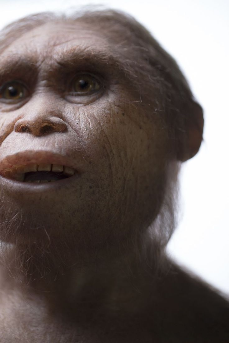 Reconstruction of Homo floresiensis - the Hobbit.