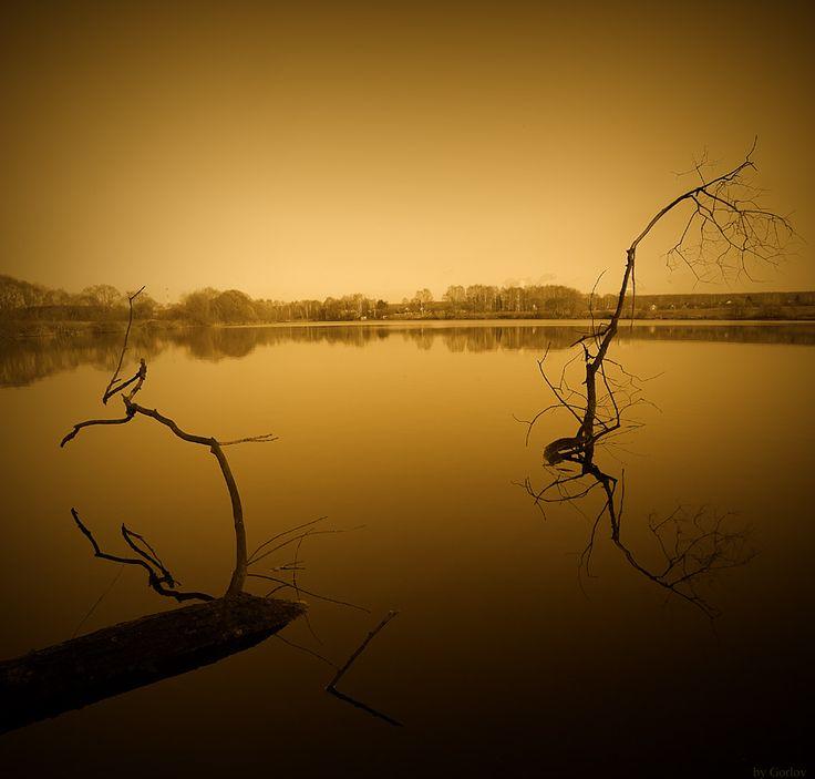 * Gold Nature * #nature Автор: Александр Горлов