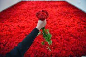 Πλησίστιος...: To τριαντάφυλλο
