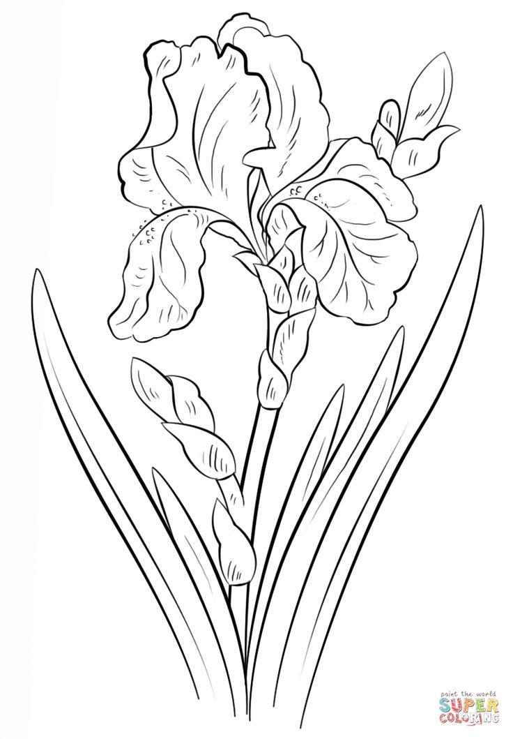 Blue Iris | Super Coloring