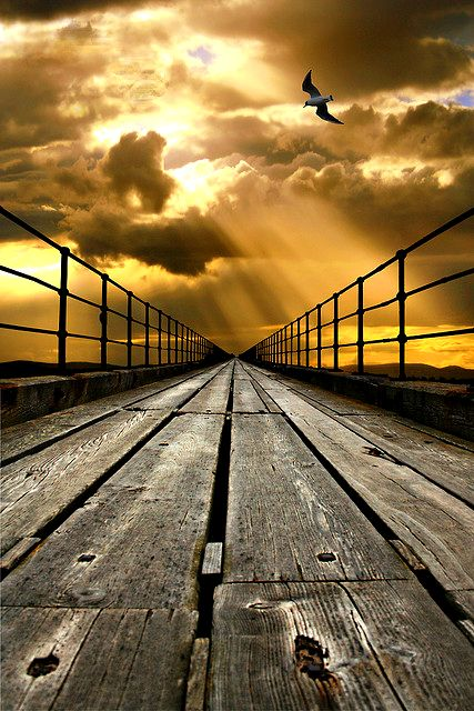 Line: The lines used in this photograph create an unbelievable vantage point, and feeling that this bridge goes on forever and ever.
