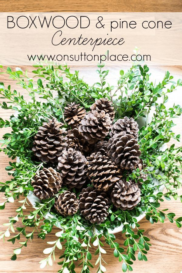 Best 25 pinecone centerpiece ideas on pinterest for Pine cone craft ideas