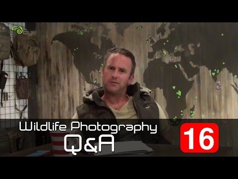 Wildlife Photography Q&A: Episode 16