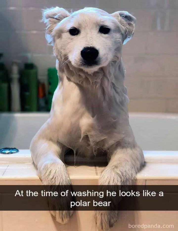 The Most Hilarious Animal Memes On The Web 1 Dog Snapchats Cute Animals Funny Animals