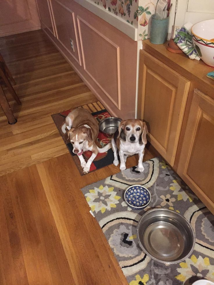 It's time to eat!!!! They don't believe in day light saving time change.   http://ift.tt/2njEkPL via /r/dogpictures http://ift.tt/2mPUoge  #lovabledogsaroundtheworld
