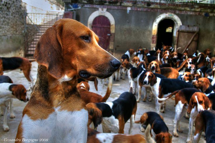 France - Loire - Château de Cheverny - le chiens