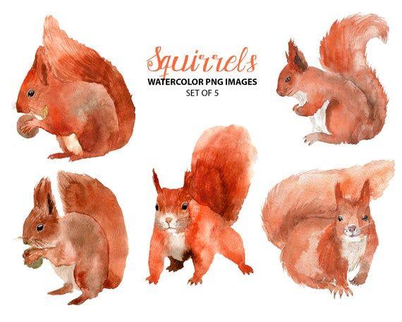Cute Squirrel Clipart Woodland Nursery Clip Art Watercolor Etsy In 2021 Squirrel Clipart Animal Illustration Squirrel Illustration