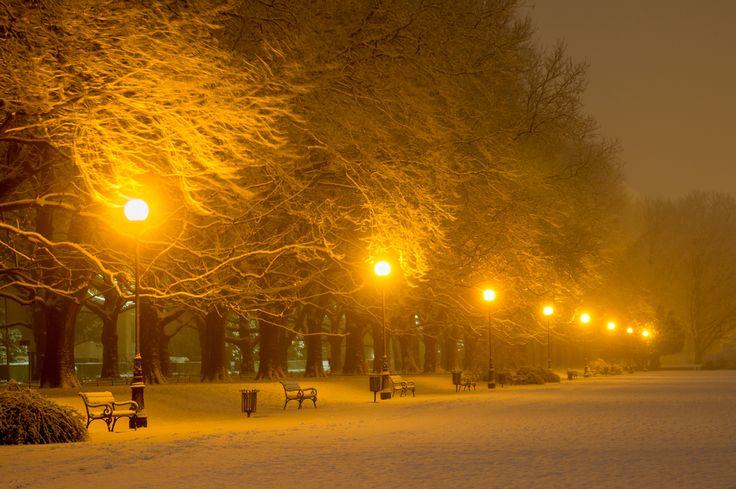 35PHOTO - Mariuszbrcz - платаны зимой