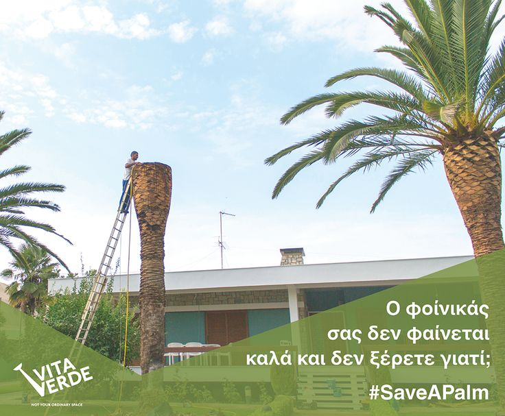 #Vitaverde on a mission to #SaveAPalm,