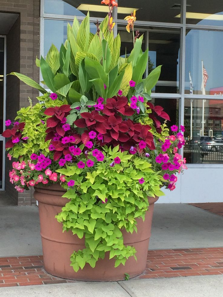 This is a really big pot, but this could be done on a smaller scale to enjoy tropicals in a cooler climate.