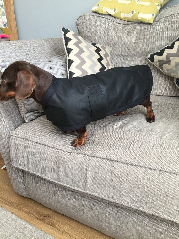 Waterproof Wax Coat Fleece Lined Dachshund Size 15 Inches By 7