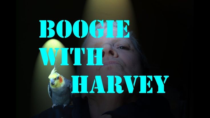 "BOOGIE WITH HARVEY As with other videos including him Harvey Esquire MAKES this! If it weren't for his help it just wouldn't be the same! Thanks Harvey! And thanks Granny Monster for having faith in me. Ah here's one for dark matters' ""So You Think You Can Dance"" series! lol As the world can see I was BORN tripping the light fantastic. Uh well maybe just tripping. :-) #createnothate"