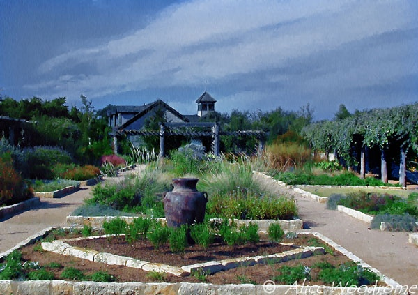 17 Best Images About The Wildflower Center On Pinterest Gardens Family Garden And Great