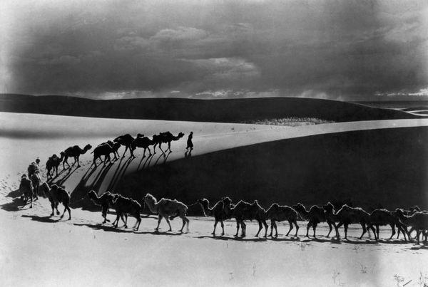 Une caravane de chameau dans le désert de Gobi (Juin 1933)