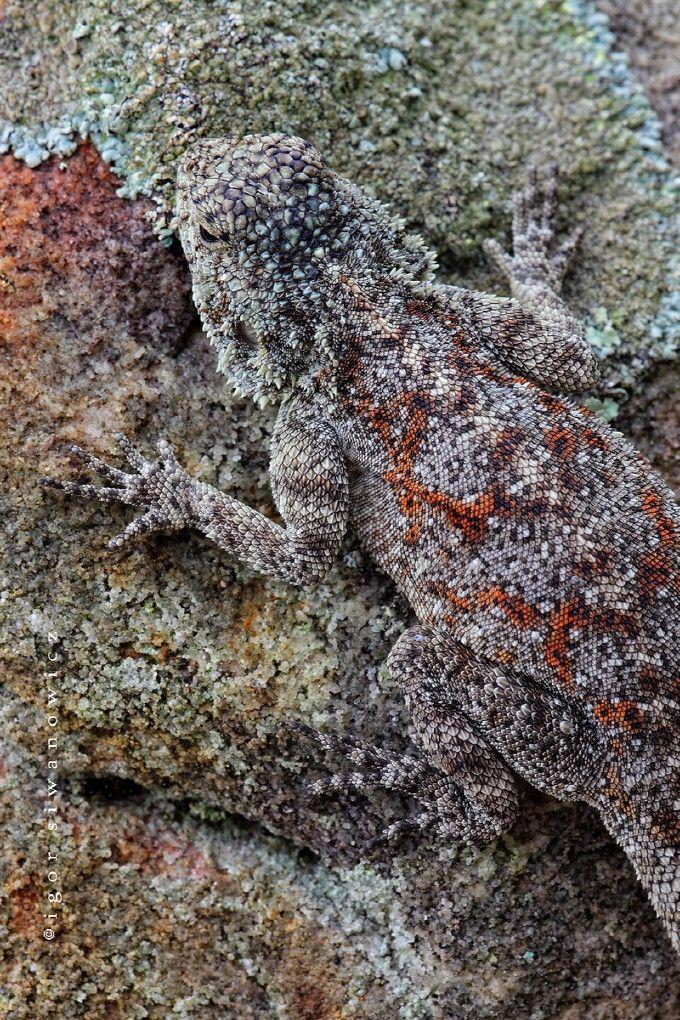 Homework help mimicry camouflage