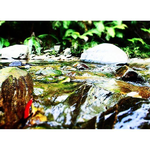 【maapalloaquaciel】さんのInstagramをピンしています。 《水の流れが涼しげ🎐 * * * * * #風景 #景色 #旅 #旅行 #日本 #沖縄 #国頭村 #やんばる学びの森 #ダム #カヌー  #自然 #山 #川 #森 #水 #木 #青 #亜熱帯 #日差し #マイナスイオン #View #Travel #trip #Japan #OKINAWA #forest #river #Nature #Water #blue》