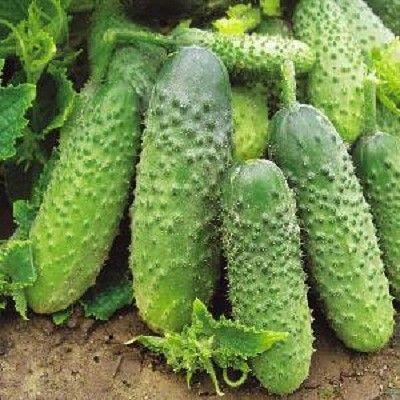 Какие овощи и когда удобрять