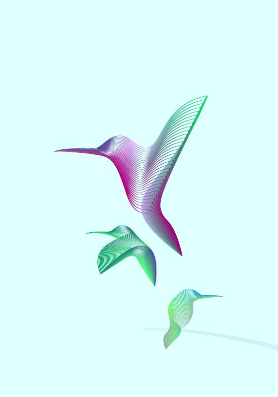 Animals in Moiré | Hummingbirds