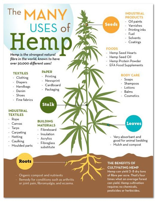 What exactly can hemp be used to make? The sky is the limit. It's such a versatile resource that it can be used as a replacement for many materials.