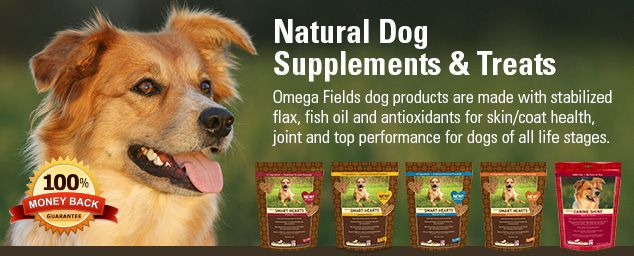Best Supplement For Dogs Immune System