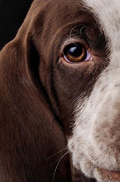 Rags was Grandad's loyal farm dog. What a great dog. ~~  Houston Foodlovers
