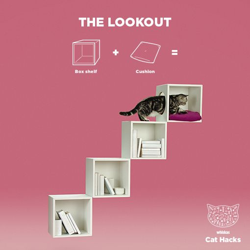WHISKAS Cat Hack: The Lookout - Curious cats love high-up hideaways, so take feline furniture to new heights with this this easy-to-build library hideyhole. Then head to our profile for more handy how-to's.