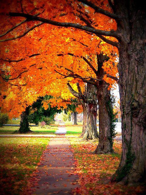 canopy of orange | Flickr