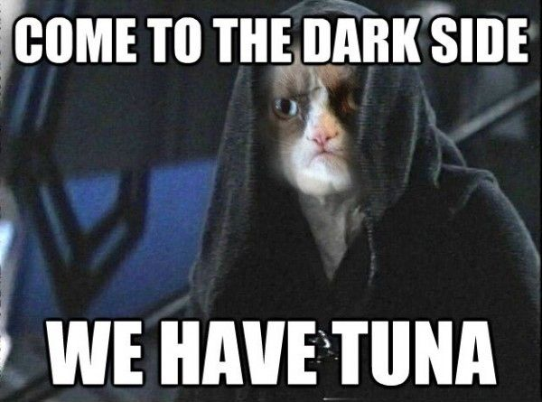Secretly, Grumpy Cat scored a major part in the new Star Wars series