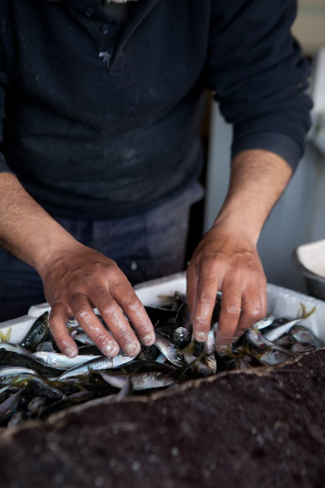 hands on fish