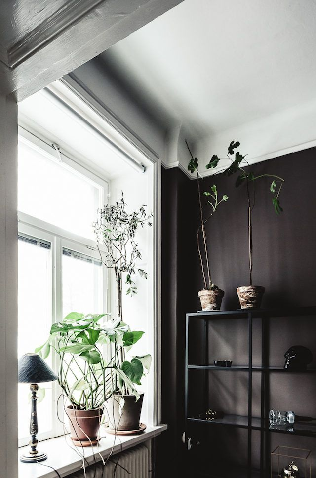 Plants in a dramatic Stockholm space in dark colours. 1 Street.
